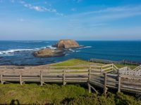 Things To Know Before You Go To Phillip Island