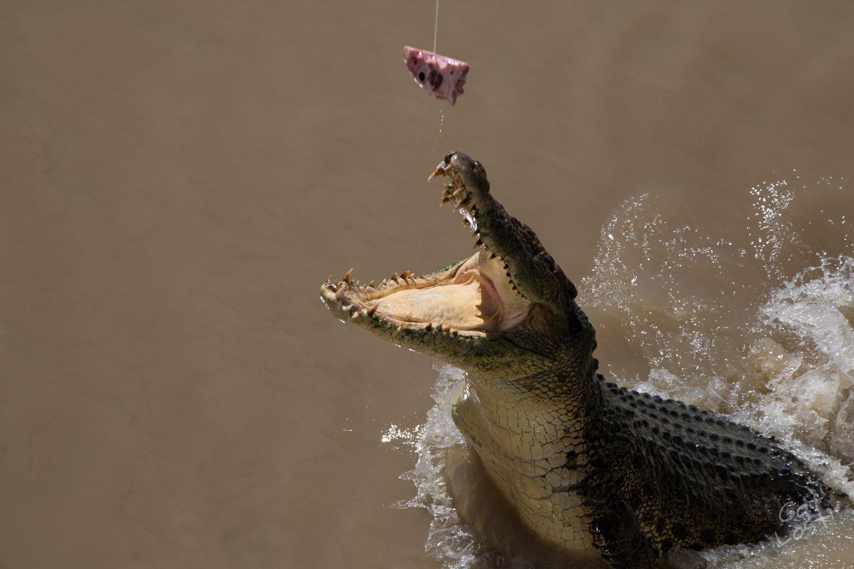 Jumping Crocs - Darwin, Northern Territory, Australia
