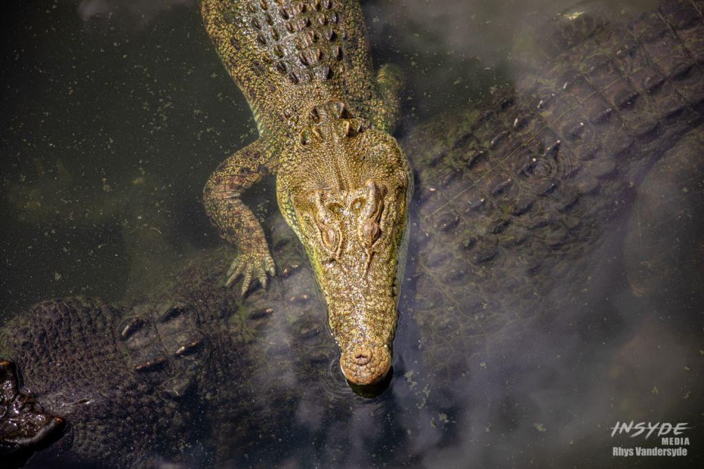 Crocodylus Park, Darwin